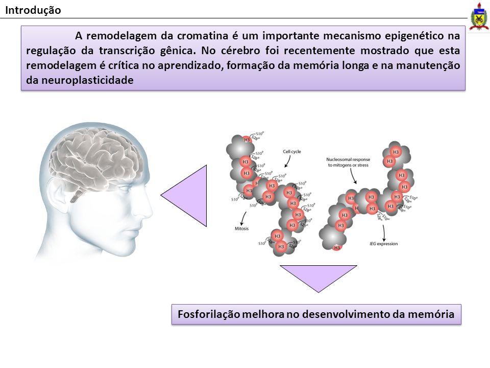 A remodelagem da cromatina é um importante mecanismo epigenético na regulação da transcrição gênica. No cérebro foi recentemente mostrado que esta rem