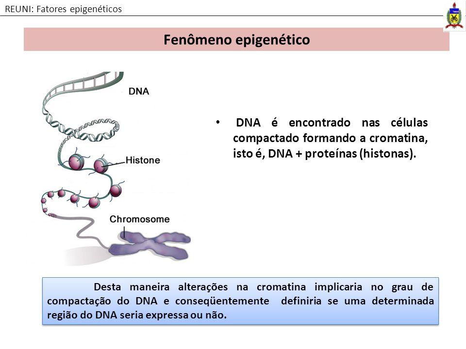 DNA é encontrado nas células compactado formando a cromatina, isto é, DNA + proteínas (histonas). Fenômeno epigenético REUNI: Fatores epigenéticos Des