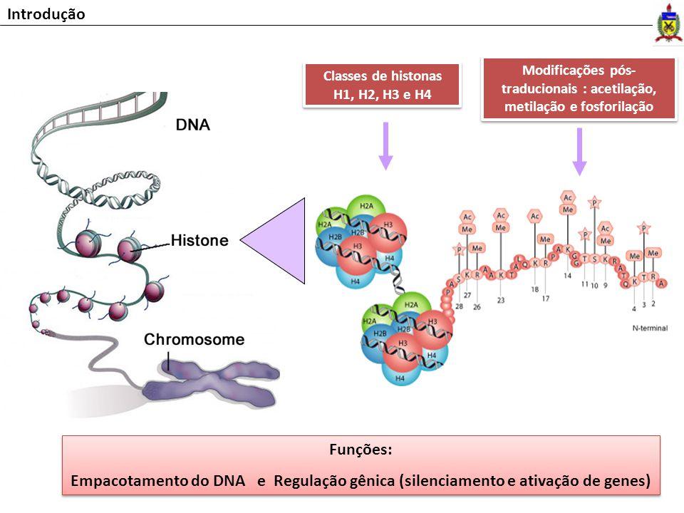 Introdução Classes de histonas H1, H2, H3 e H4 Modificações pós- traducionais : acetilação, metilação e fosforilação Funções: Empacotamento do DNA e R