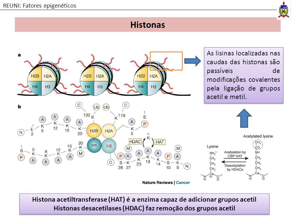 Histonas REUNI: Fatores epigenéticos As lisinas localizadas nas caudas das histonas são passíveis de modificações covalentes pela ligação de grupos ac