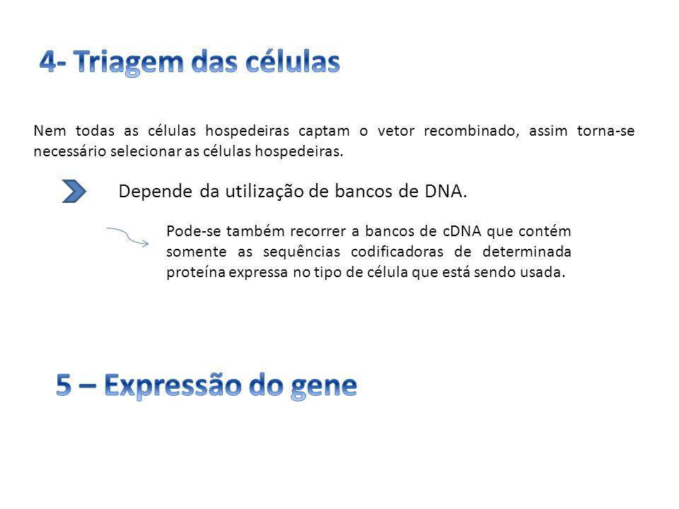 Nem todas as células hospedeiras captam o vetor recombinado, assim torna-se necessário selecionar as células hospedeiras. Depende da utilização de ban