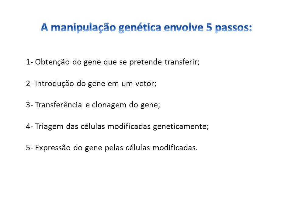 1- Obtenção do gene que se pretende transferir; 2- Introdução do gene em um vetor; 3- Transferência e clonagem do gene; 4- Triagem das células modific
