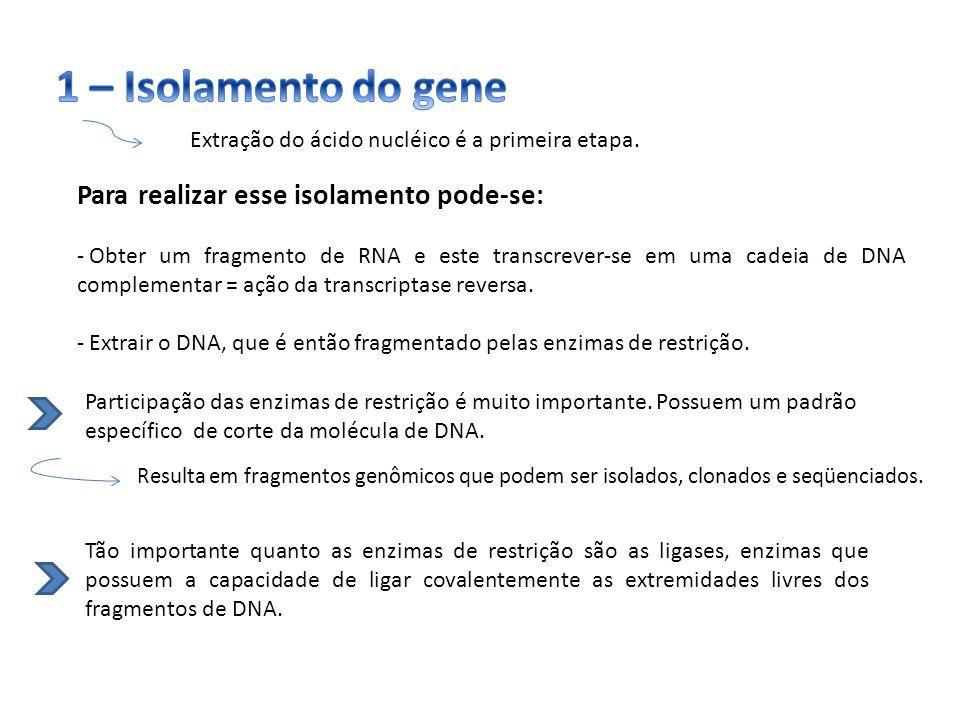Extração do ácido nucléico é a primeira etapa. Para realizar esse isolamento pode-se: - Obter um fragmento de RNA e este transcrever-se em uma cadeia