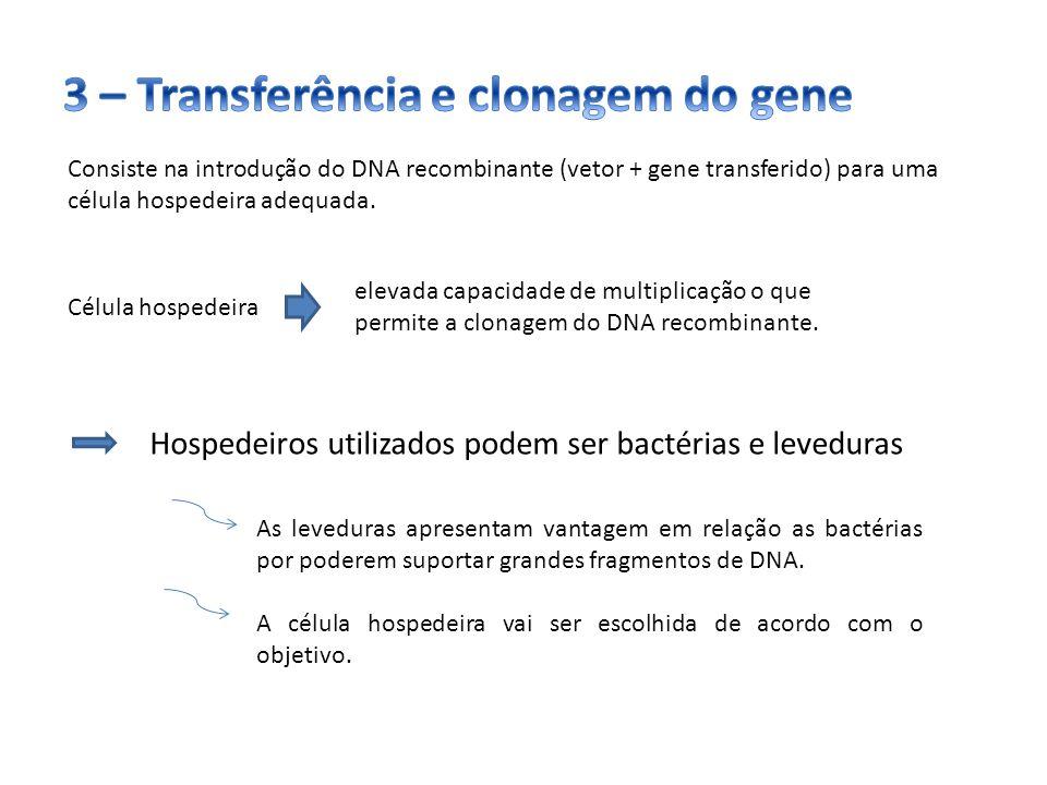 Consiste na introdução do DNA recombinante (vetor + gene transferido) para uma célula hospedeira adequada. Hospedeiros utilizados podem ser bactérias