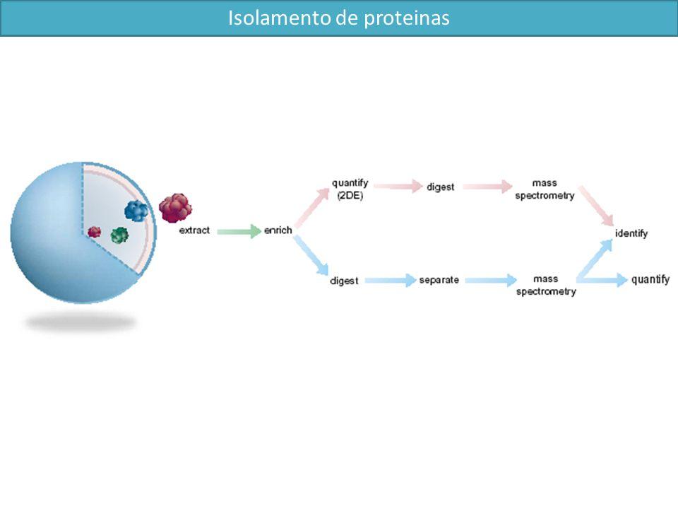 Isolamento de proteinas
