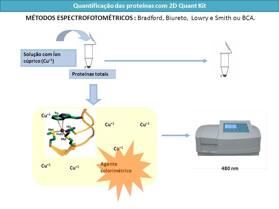 Quantificação das proteínas com 2D Quant Kit Solução com Íon cúprico (Cu +1 ) Cu +1 Agente colorimétrico Cu +1 480 nm Proteínas totais MÉTODOS ESPECTROFOTOMÉTRICOS : Bradford, Biureto, Lowry e Smith ou BCA.