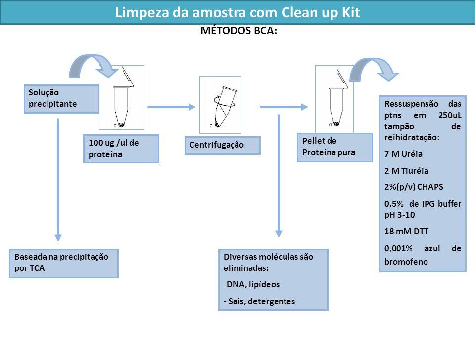 Limpeza da amostra com Clean up Kit 100 ug /ul de proteína Solução precipitante Centrifugação Baseada na precipitação por TCA Diversas moléculas são eliminadas: -DNA, lipídeos - Sais, detergentes Pellet de Proteína pura Ressuspensão das ptns em 250uL tampão de reihidratação: 7 M Uréia 2 M Tiuréia 2%(p/v) CHAPS 0.5% de IPG buffer pH 3-10 18 mM DTT 0,001% azul de bromofeno MÉTODOS BCA: