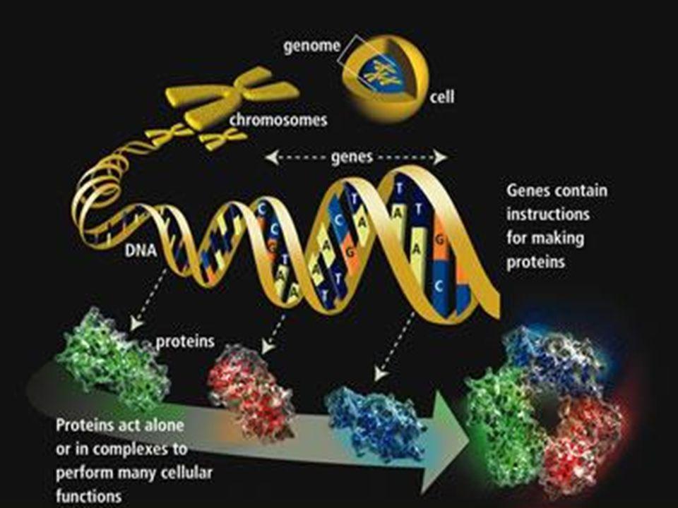 Proteômica A palavra PROTEOMA refere-se as PROTEínas expressas por um genOMA.