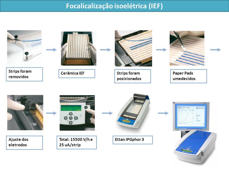 Strips foram removidos Cerâmica IEFStrips foram posicionados Paper Pads umedecidos Total: 15500 V/h e 25 uA/strip Ettan IPGphor 3Ajuste dos eletrodos Focalicalização isoelétrica (IEF)