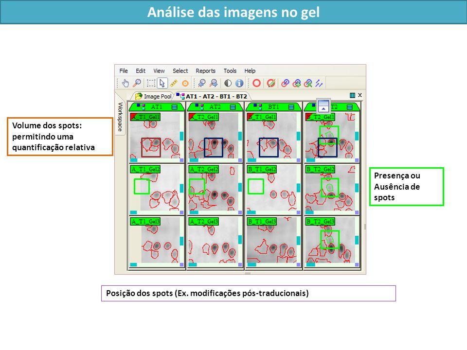 Análise das imagens no gel Posição dos spots (Ex.