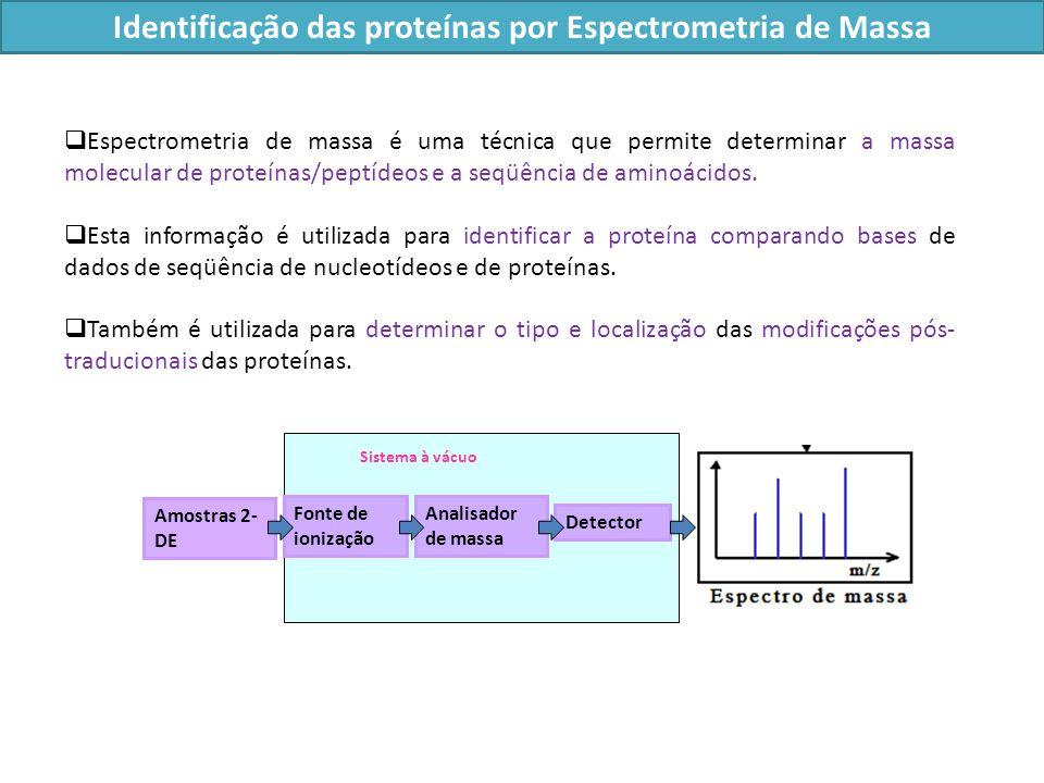 Espectrometria de massa é uma técnica que permite determinar a massa molecular de proteínas/peptídeos e a seqüência de aminoácidos.
