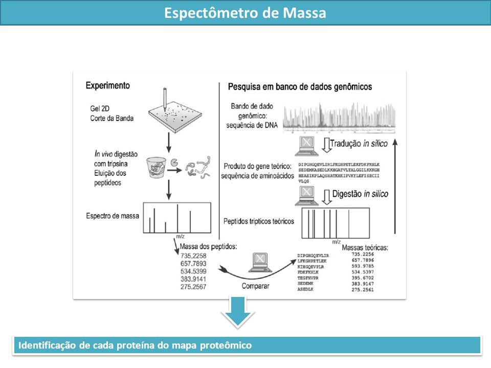 Espectômetro de Massa Identificação de cada proteína do mapa proteômico