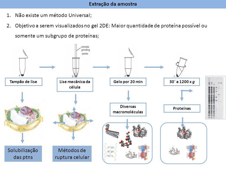 Tampão de liseLise mecânica da célula 30´ a 1200 x gGelo por 20 min Diversas macromoléculas Proteínas Extração da amostra 1.Não existe um método Unive