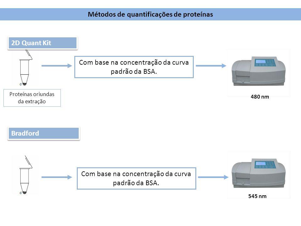Proteínas oriundas da extração Bradford 545 nm Métodos de quantificações de proteínas Com base na concentração da curva padrão da BSA. 2D Quant Kit 48
