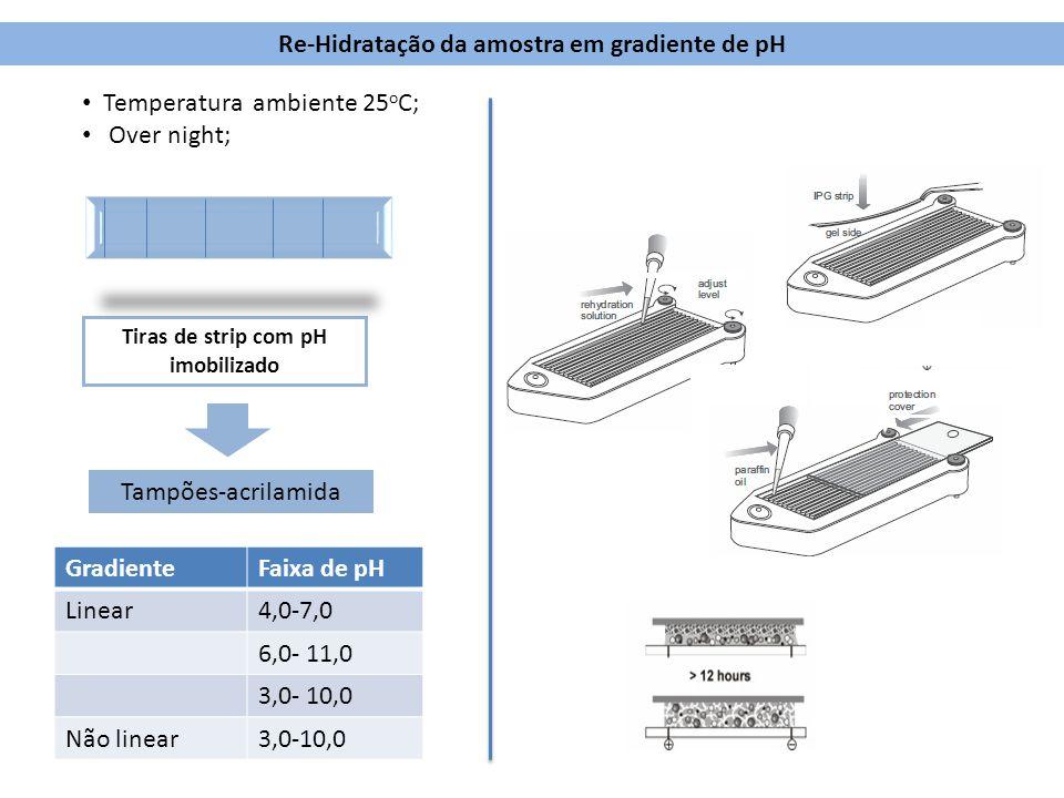 Tiras de strip com pH imobilizado Re-Hidratação da amostra em gradiente de pH Tampões-acrilamida Temperatura ambiente 25 o C; Over night; GradienteFai