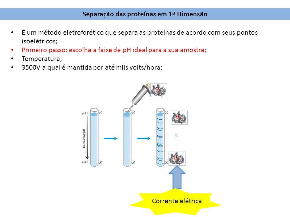 Separação das proteínas em 1ª Dimensão É um método eletroforético que separa as proteínas de acordo com seus pontos isoelétricos; Primeiro passo: esco
