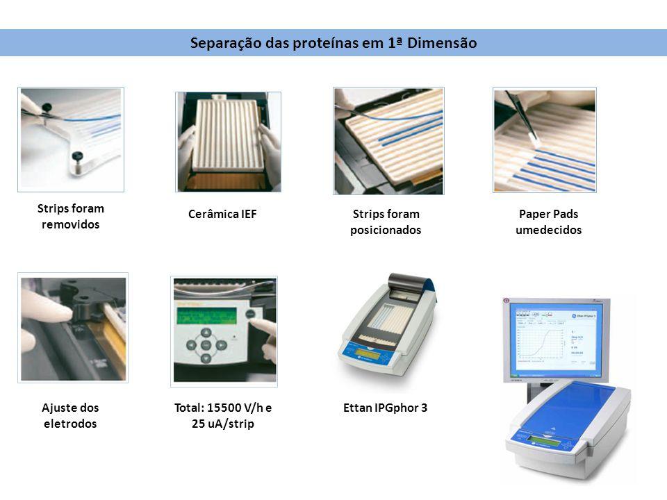 Strips foram removidos Cerâmica IEFStrips foram posicionados Paper Pads umedecidos Total: 15500 V/h e 25 uA/strip Ettan IPGphor 3Ajuste dos eletrodos