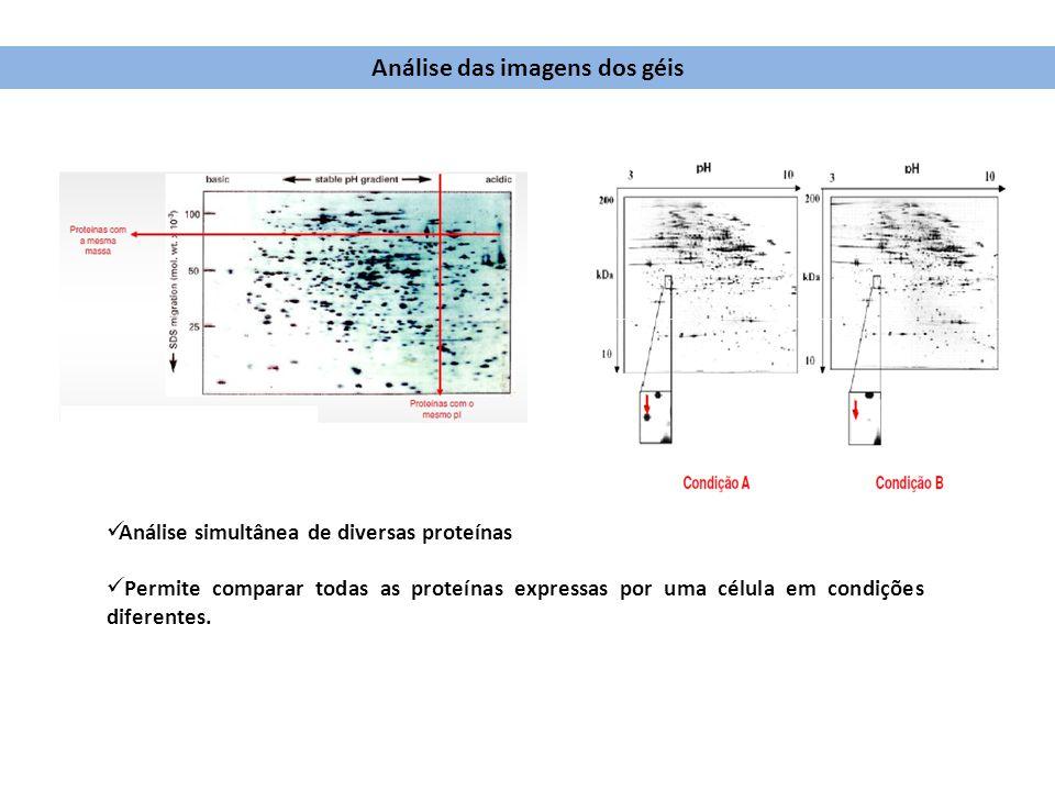 Análise simultânea de diversas proteínas Permite comparar todas as proteínas expressas por uma célula em condições diferentes. Análise das imagens dos