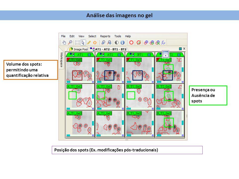 Posição dos spots (Ex. modificações pós-traducionais) Volume dos spots: permitindo uma quantificação relativa Presença ou Ausência de spots Análise da