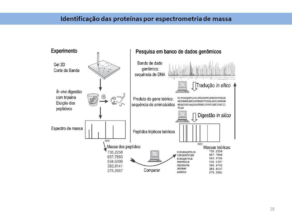 28 Identificação das proteínas por espectrometria de massa