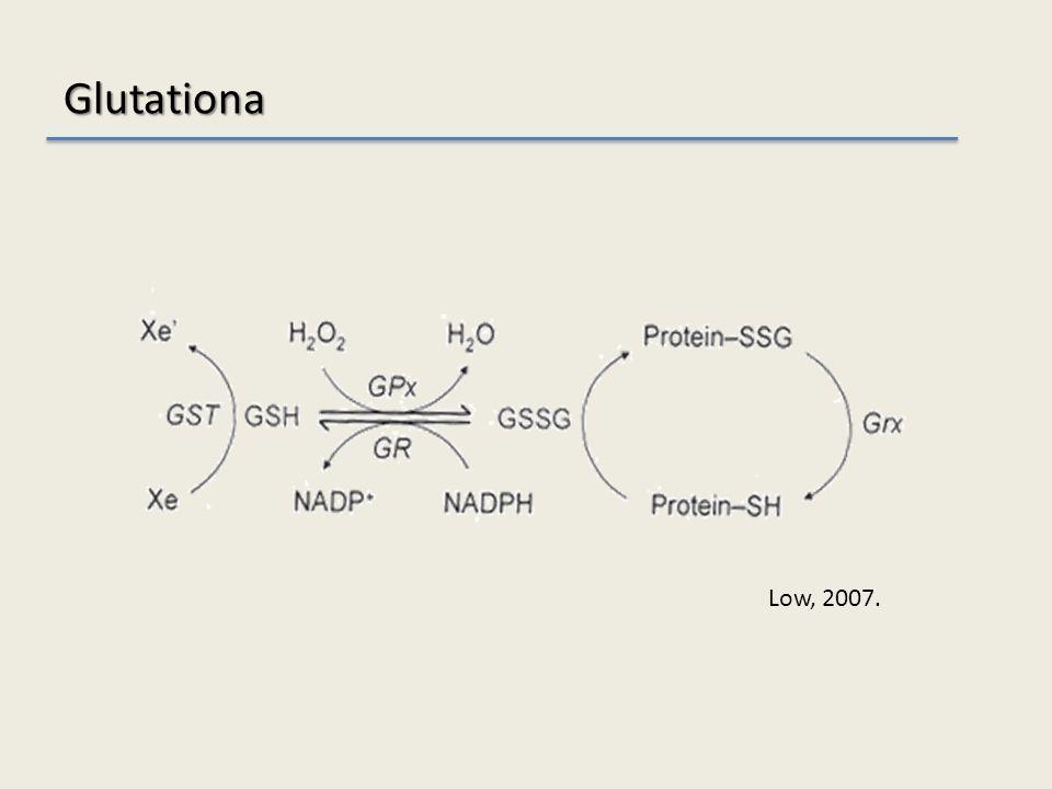 Glutationa Low, 2007.