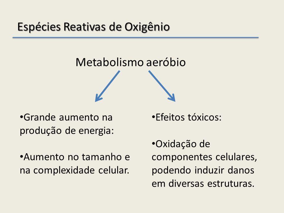 Metabolismo aeróbio Espécies Reativas de Oxigênio Grande aumento na produção de energia: Aumento no tamanho e na complexidade celular. Efeitos tóxicos