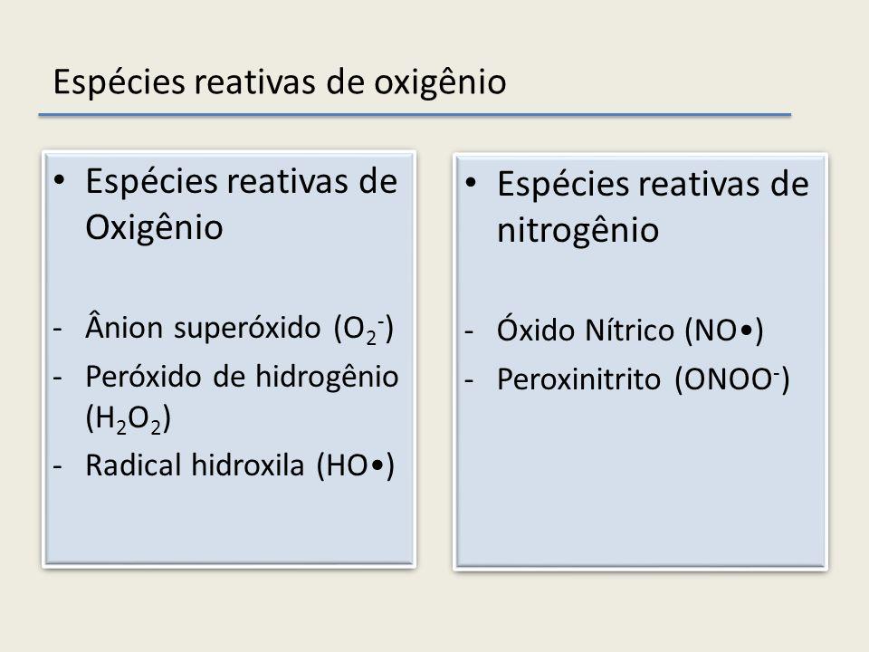 Espécies reativas de Oxigênio -Ânion superóxido (O 2 - ) -Peróxido de hidrogênio (H 2 O 2 ) -Radical hidroxila (HO) Espécies reativas de Oxigênio -Âni