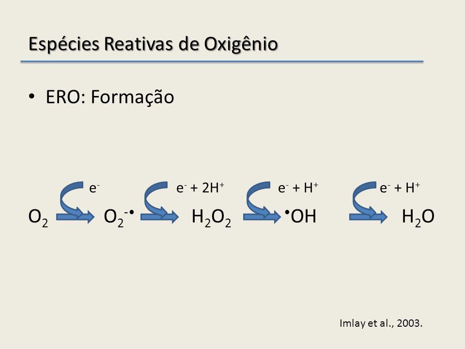 Espécies Reativas de Oxigênio ERO: Formação e - e - + 2H + e - + H + e - + H + O 2 O 2 - H 2 O 2 OH H 2 O Imlay et al., 2003.
