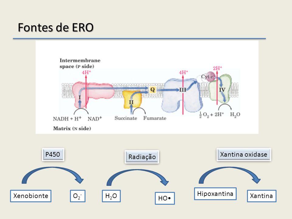 Fontes de ERO XenobionteO2-O2- P450 H2OH2O HO Radiação Hipoxantina Xantina Xantina oxidase