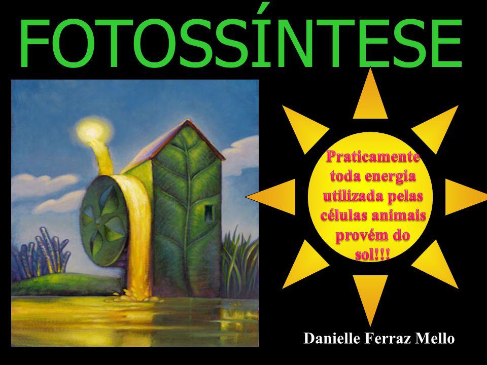 FOTOSSÍNTESE Danielle Ferraz Mello