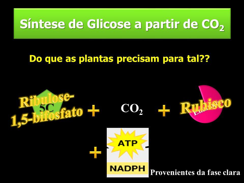 Síntese de Glicose a partir de CO 2 Do que as plantas precisam para tal?? 5C CO 2 Enzimas Energia Provenientes da fase clara