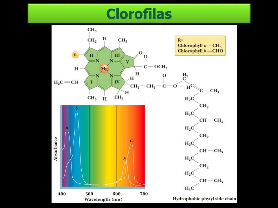 Clorofilas
