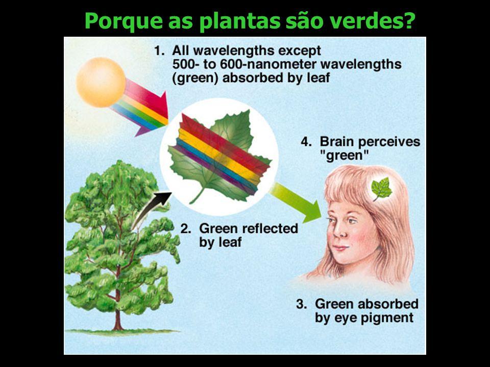 Porque as plantas são verdes?