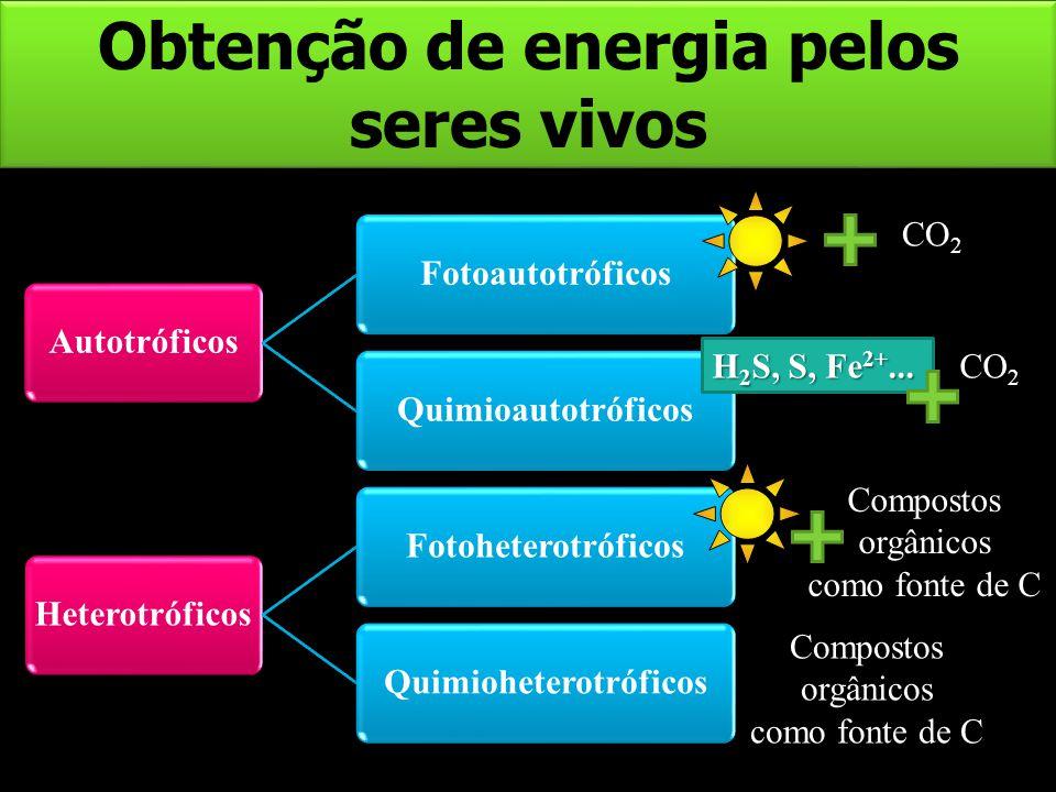 Obtenção de energia pelos seres vivos AutotróficosFotoautotróficosQuimioautotróficosHeterotróficosFotoheterotróficosQuimioheterotróficos H 2 S, S, Fe