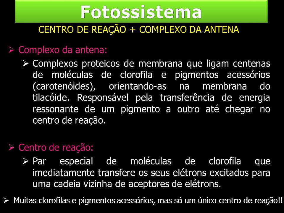 Complexo da antena: Complexos proteicos de membrana que ligam centenas de moléculas de clorofila e pigmentos acessórios (carotenóides), orientando-as