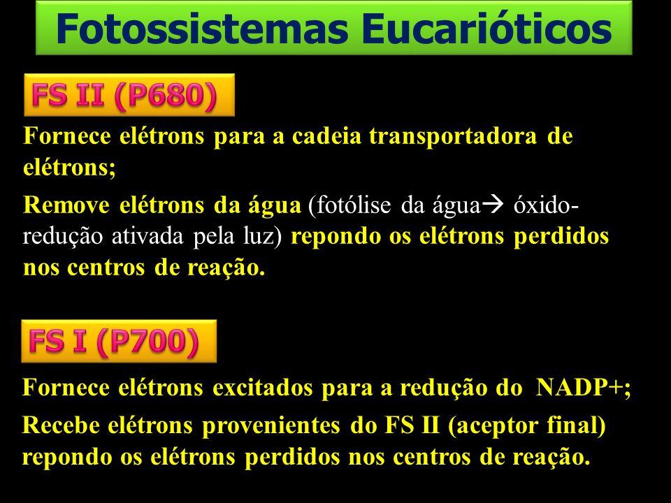 Fornece elétrons para a cadeia transportadora de elétrons; Remove elétrons da água (fotólise da água óxido- redução ativada pela luz) repondo os elétr