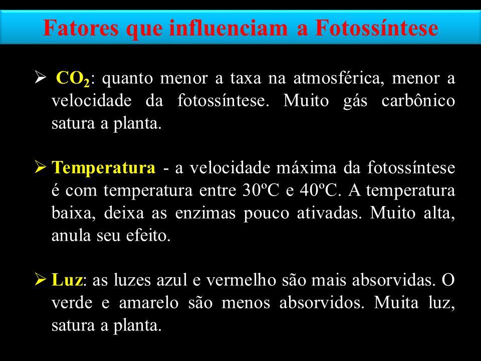 Fatores que influenciam a Fotossíntese CO 2 : quanto menor a taxa na atmosférica, menor a velocidade da fotossíntese. Muito gás carbônico satura a pla