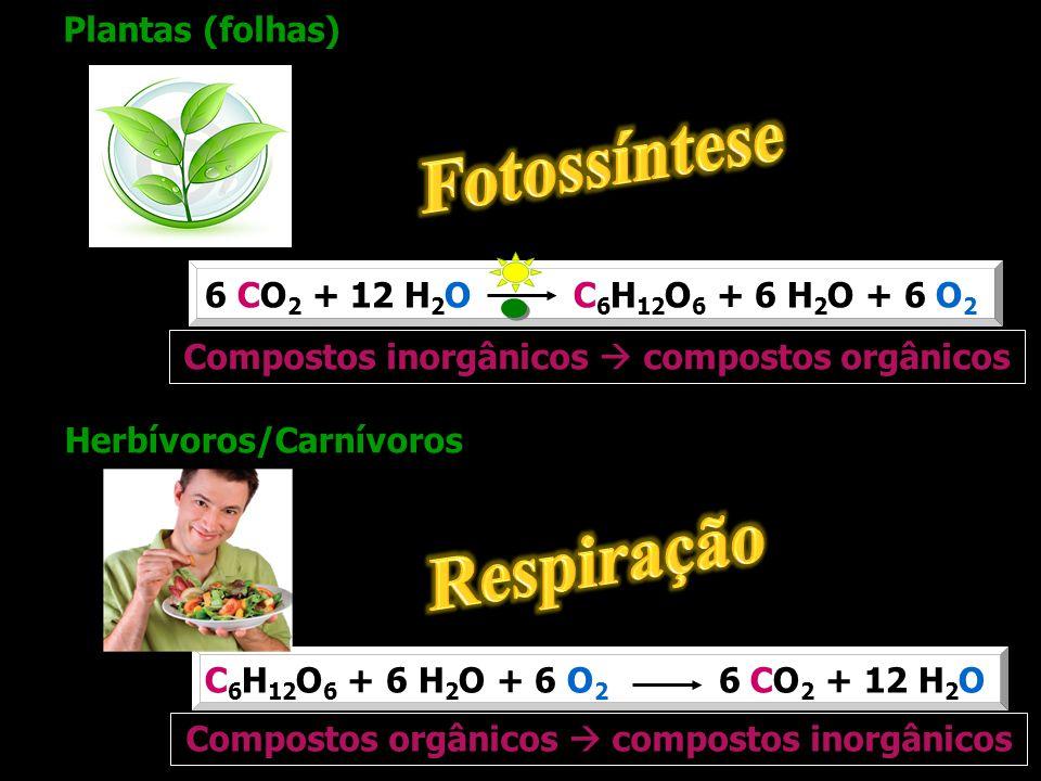 6 CO 2 + 12 H 2 O C 6 H 12 O 6 + 6 H 2 O + 6 O 2 C 6 H 12 O 6 + 6 H 2 O + 6 O 2 6 CO 2 + 12 H 2 O Plantas (folhas) Herbívoros/Carnívoros Compostos ino