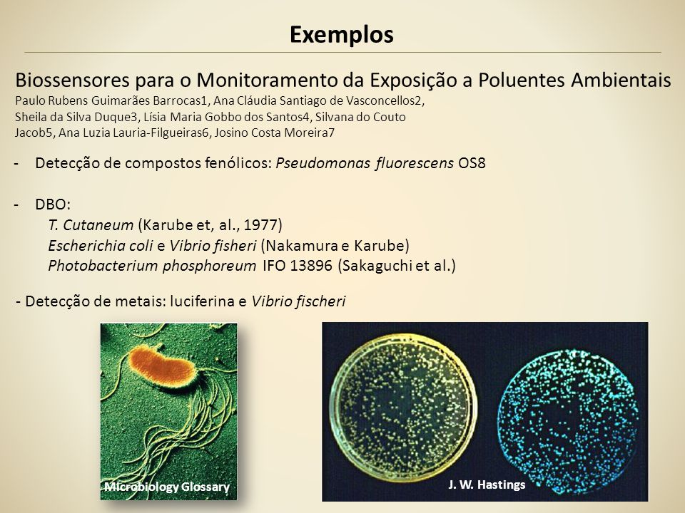 Exemplos Biossensores Aplicação de Biossensor microbiano bioluminescente na detecção de HG(II) Gisele dos Santos Costa UFRJ - HG: poluente global - Objetivo: detecção de mercúrio biodisponível em amostras ambientais - Métodos: Escherichia coli MC1061 modificada para ser sensível ao Hg (luciferase) http://tpqb.eq.ufrj.br/download/biossensor-bioluminescente-na-deteccao-de-hg.pdf