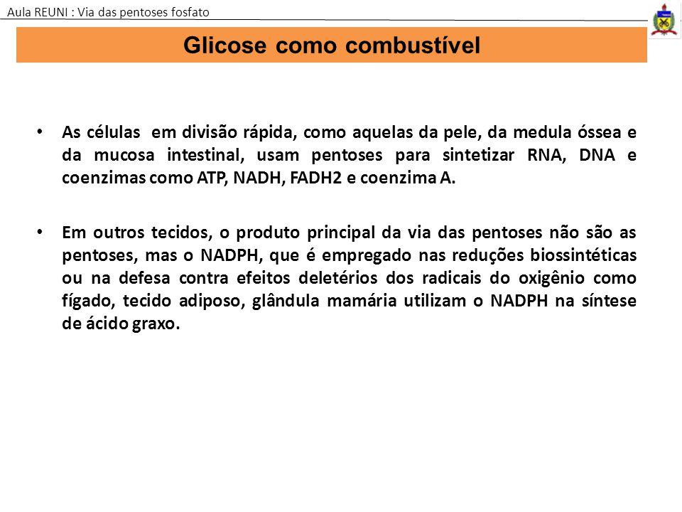 Glicose como combustível Aula REUNI : Via das pentoses fosfato As células em divisão rápida, como aquelas da pele, da medula óssea e da mucosa intesti