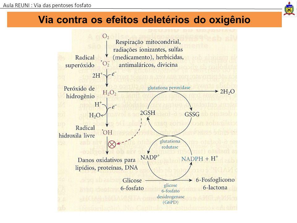 Via contra os efeitos deletérios do oxigênio Aula REUNI : Via das pentoses fosfato