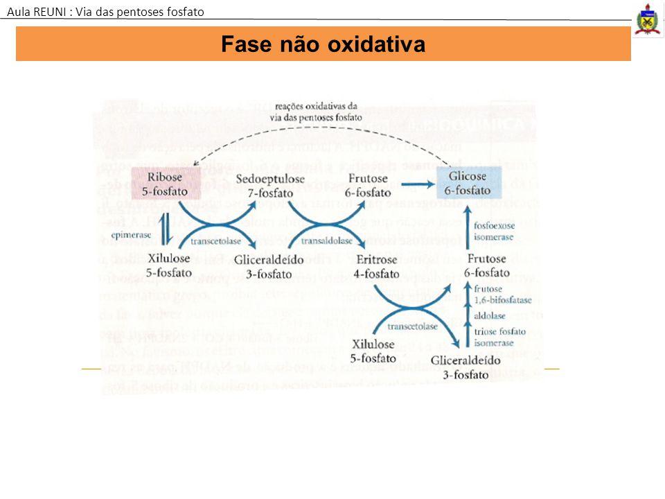 Fase não oxidativa Aula REUNI : Via das pentoses fosfato