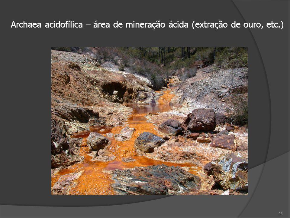 23 Archaea acidofílica – área de mineração ácida (extração de ouro, etc.)