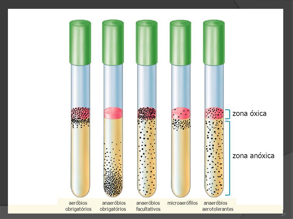 27 aeróbios anaeróbios anaeróbios microaerófilos anaeróbios obrigatórios obrigatórios facultativos aerotolerantes zona óxica zona anóxica