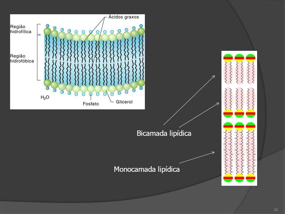 38 Monocamada lipídica Bicamada lipídica