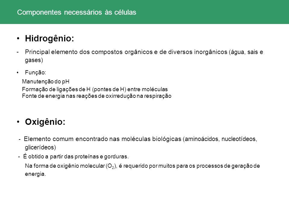 35 Synechococcus cianobactérias