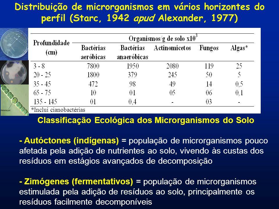 *Inclui cianobactérias Distribuição de microrganismos em vários horizontes do perfil (Starc, 1942 apud Alexander, 1977) Classificação Ecológica dos Microrganismos do Solo - Autóctones (indígenas) = população de microrganismos pouco afetada pela adição de nutrientes ao solo, vivendo às custas dos resíduos em estágios avançados de decomposição - Zimógenes (fermentativos) = população de microrganismos estimulada pela adição de resíduos ao solo, principalmente os resíduos facilmente decomponíveis