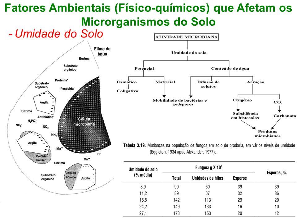 Fatores Ambientais (Físico-químicos) que Afetam os Microrganismos do Solo -Umidade do Solo