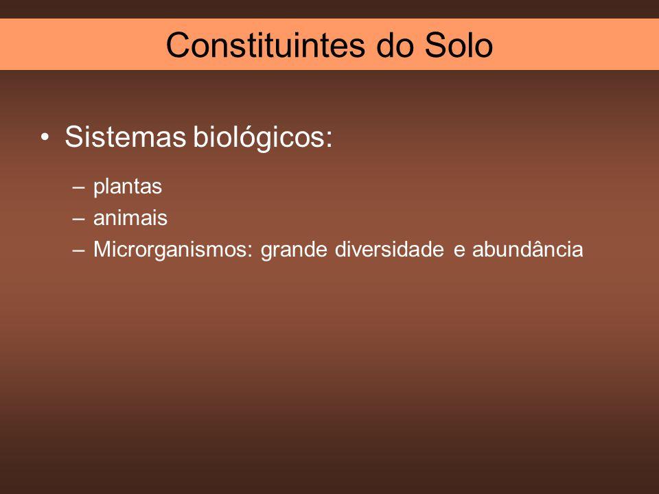 Sistemas biológicos: –plantas –animais –Microrganismos: grande diversidade e abundância Constituintes do Solo