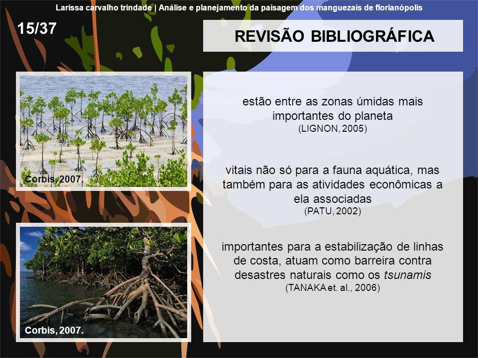 REVISÃO BIBLIOGRÁFICA estão entre as zonas úmidas mais importantes do planeta (LIGNON, 2005) vitais não só para a fauna aquática, mas também para as a